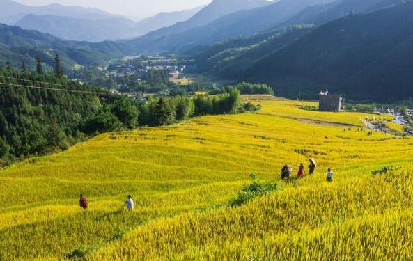 黑山护照只需25万欧元起,是否值得办理?